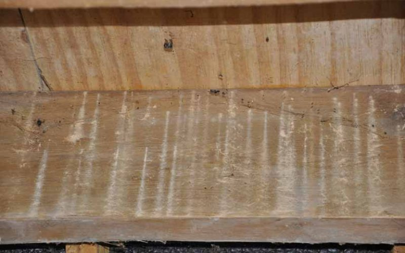 4. Woodworm